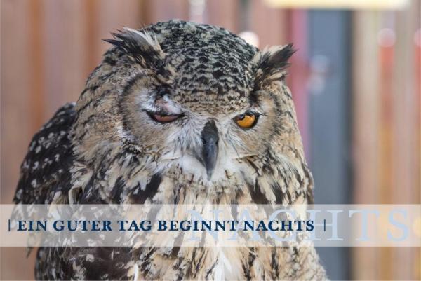 billerbeck-Blog_Schlaf_Eule-oder-Lerche